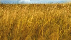 Beautiful shot of Highveld Grass in Africa while on Safari GFHD Stock Footage