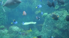 Sea Life Sharks Fish Reef Jelly fish and more - stock footage