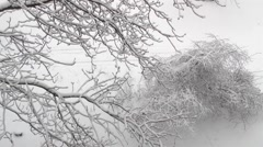 winter bush in the wind - stock footage