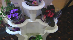 African Violet Flowers and green ivy in white Pillar Planter Stock Footage