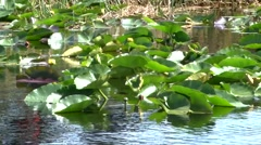 River Flowers Stock Footage