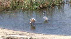 Birds Eating 3 Stock Footage