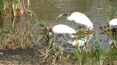 Birds Eating 2 Stock Footage