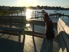 Dog Looks Out Over Harbor Stock Footage