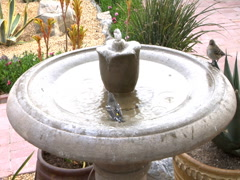 2 finches in take bath in birdbath - stock footage