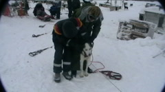 Norway, sled dogs preparing Stock Footage