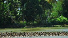 Duck farming on the Kerala backwaters, nr Alleppey, Kerala, India - stock footage