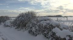 Snow covered hedge, farmland beyond. Stock Footage