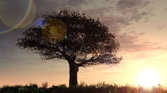 Cherry tree on hill sunrise - stock footage