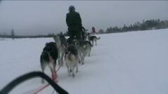 Norway, sled dogs ride - stock footage