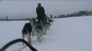 Stock Video Footage of Norway, sled dogs ride