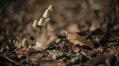 Mushrooms and shadows Stock Footage