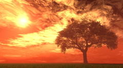 Willow tree in field with fire sky Stock Footage