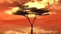 Umbrella tree fire sky Stock Footage