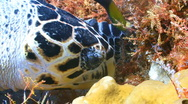 Stock Video Footage of turtle eat feed close up