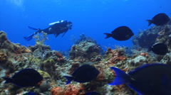 Diver swimming with a school of fish Stock Footage