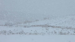 Snow blizzard on farm field hill HD Stock Footage