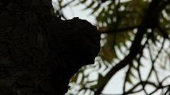 Neem Tree Stock Footage