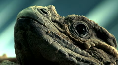 Rhinoceros Iguana Stock Footage