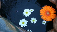 Daisy Meditation Stock Footage