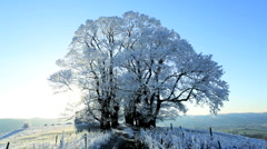 Frozen Landscape with single male walking, nr Wotton Under Edge, Cotswolds, Glos - stock footage