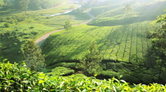 Auto Rickshaw moving alongside Tea plantations, Munnar, Kerala, India Stock Footage