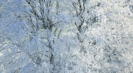 Stock Video Footage of Frozen Landscape of trees nr  Wotton Under Edge Cotswold, Glos