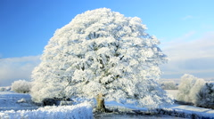 Scenic ice covered tree nr Wotton Under Edge, Cotswolds, Glos Stock Footage
