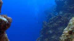 Coral on a deep wall Stock Footage