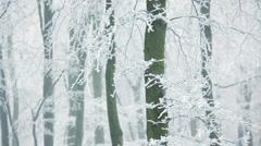 Scenic ice covered tree nr Wotton Under Edge, Cotswold, Glos Stock Footage
