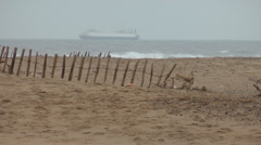 Sandy beach with storm battered wood and wire fence, cargo ship on horizon Stock Footage