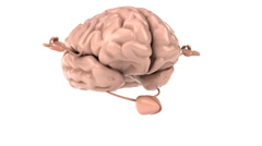 Zen brain Stock Footage