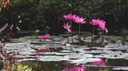 Lotus Stock Footage