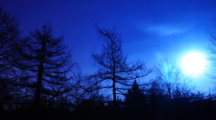 Night sky over crooked tree 2 Stock Footage