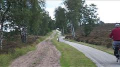 National Park de Sallandse Heuvelrug, landscape Stock Footage