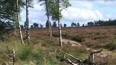 National Park de Sallandse Heuvelrug, man on mountain Stock Footage