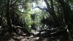 mangrove jungle - stock footage