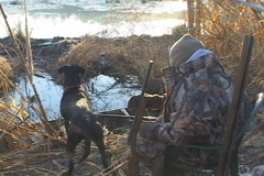 Duck Hunting Dog Stock Footage
