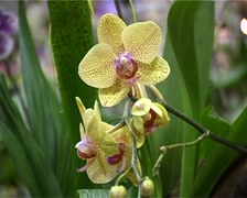 Orchid at Changi Airport, Singapore_GFSD Stock Footage