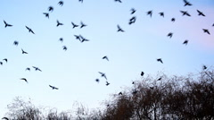 Birds flying away - stock footage