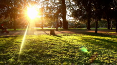 Lawn sunset - stock footage
