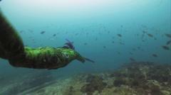 Spearfisherman Stock Footage