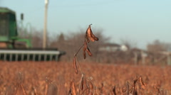 Field of Soy Beans Stock Footage