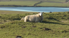 Zoom out from sheep in a field to reveal Hadrian's Wall and Roman Road Stock Footage