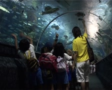 Stock Video Footage of Asian Schoolchildren in Underwater Tunnel_GFSD