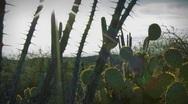 (1251) Arizona desert saguaro prickly pear cactus sonora desert time-lapse Stock Footage
