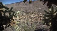 (1249) Arizona Sonora Desert Cactus Saguaro National Monument Stock Footage