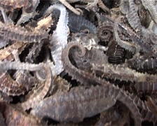 Dried Seahorses at an Asian Market GFSD Stock Footage