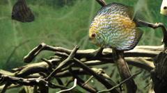 Aquarium Fish - stock footage