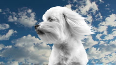 Dog Heaven Time Lapse Stock Footage